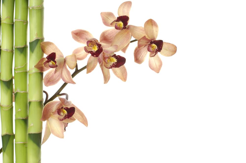 和婚 装花 竹と花