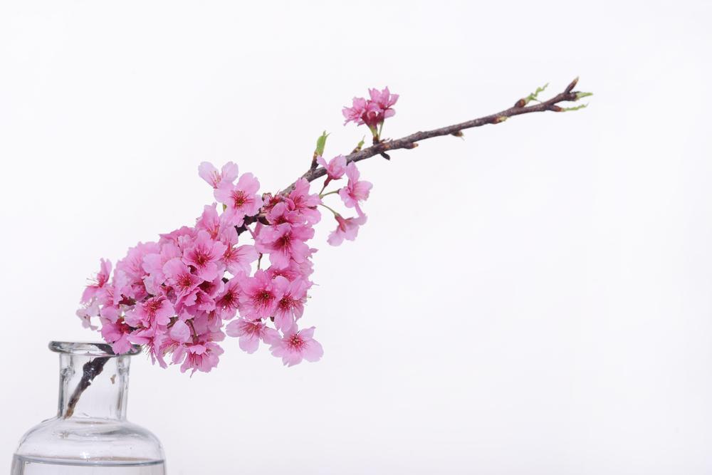 和婚 装花 桜