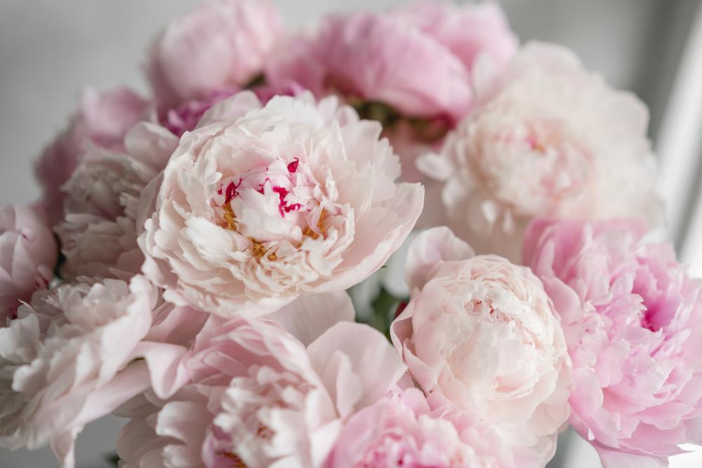 和婚 装花 芍薬